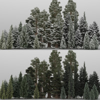 40+40 Conifer Trees