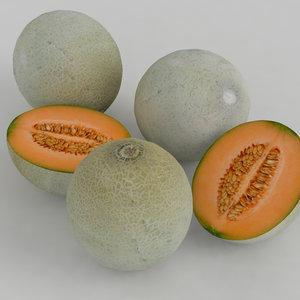 melon cantaloupe model