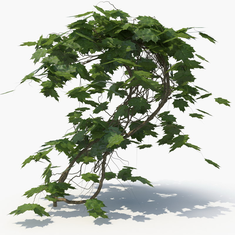 3D ivy plant