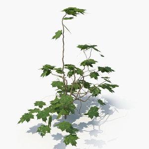 realistic ivy plant 3D model
