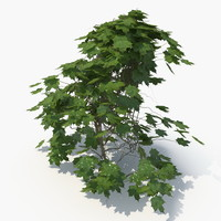 realistic ivy plant 3D