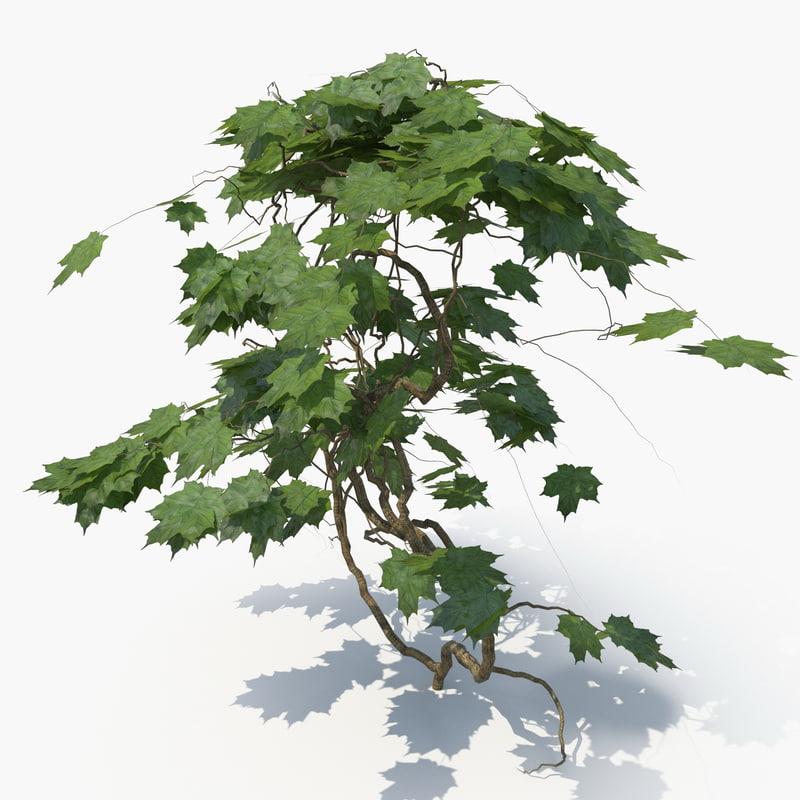3D realistic ivy plant