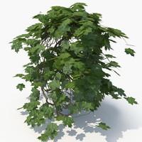 3D realistic ivy plant model