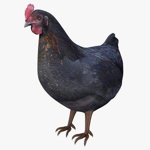 3D realistic hen model