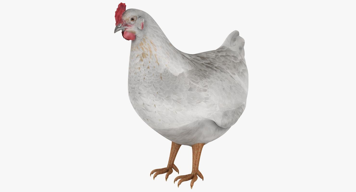 realistic hen white 3D