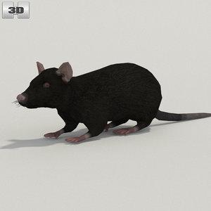 3D model rat black