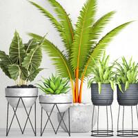 plants pot 3D