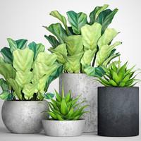 ficus lyrata pots 3D model