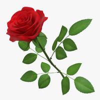 Rose 01