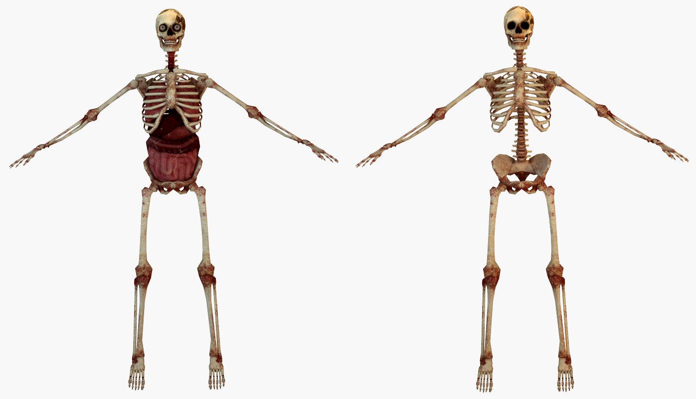 Human Skeleton Internal 3d Model Turbosquid 1152393