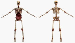 human skeleton internal 3D model