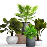palms pots 3D model