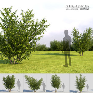shrubs enclosing horizons model