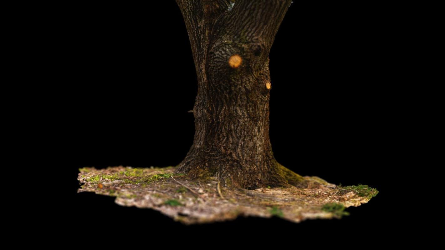 3D tree ground model