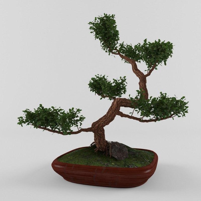 myrtle tree bonsai 3D model