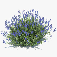 lavender plant model