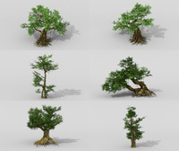 banyan tree setting 3D model