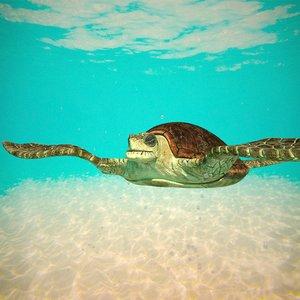 3D model giant sea turtle