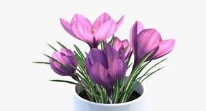 3D crocus flowering