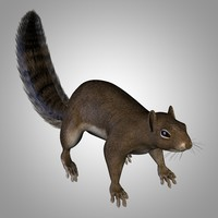 rigged squirrel 3D model