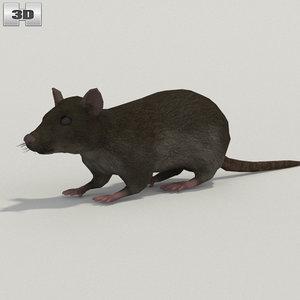 3D rat common