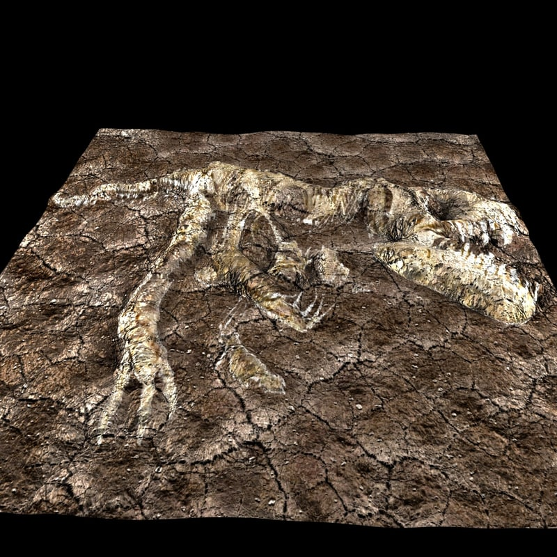 3D t-rex fossilized model