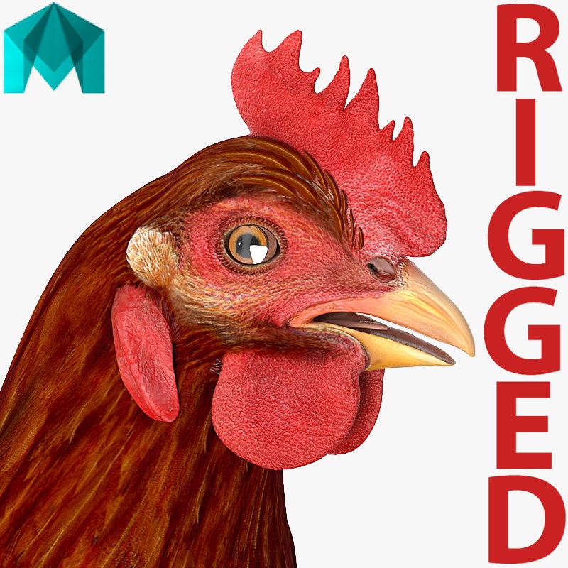 3D brown chicken rigged model