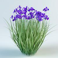 3D iris sibirica model