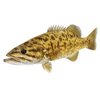 smallmouth bass 3D model