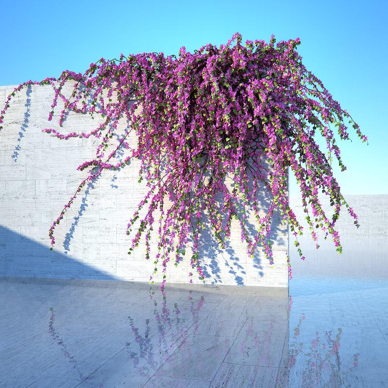 bougainvillea plant model