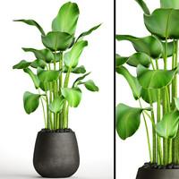 banana plants 3D