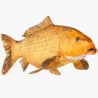 golden carp koi fish model