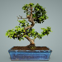 3D bonsai tree 6