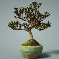 3D bonsai tree