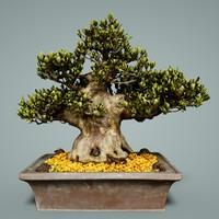 bonsai tree satsuki chinzan 3D