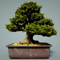 bonsai tree satsuki hakurin 3D model