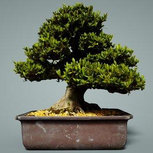 bonsai tree satsuki hakurin 3D model
