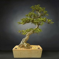 3D bonsai tree satsuki model