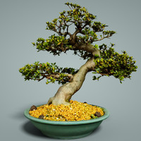 bonsai tree satsuki model