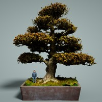 bonsai tree satsuki kinsai 3D model
