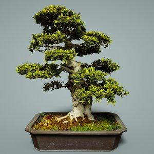 3D bonsai tree satsuki model