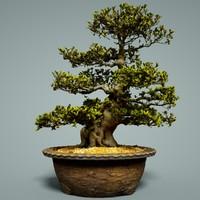 3D bonsai tree satsuki