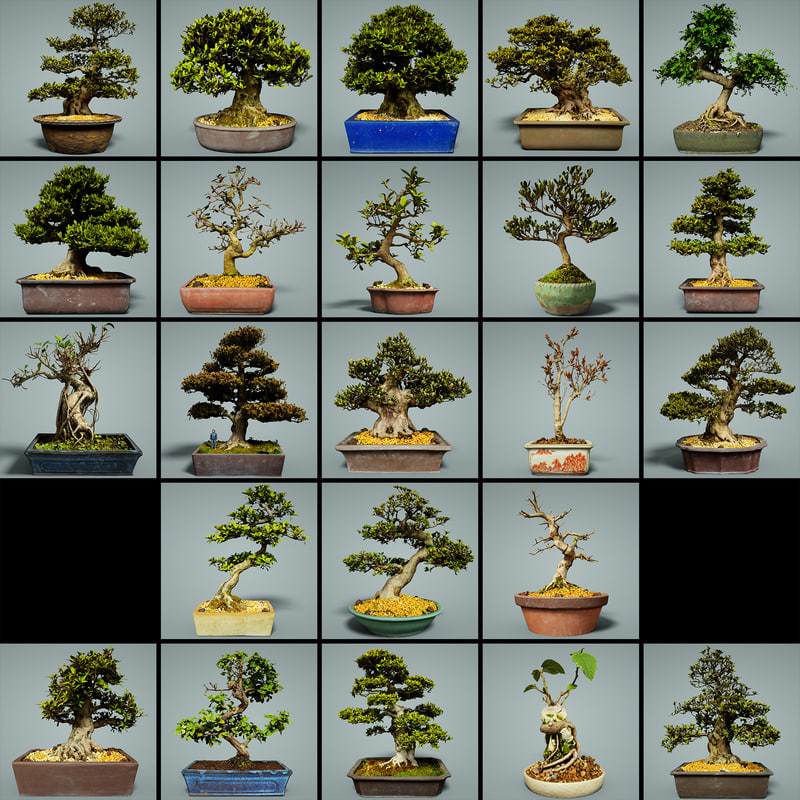 bonsai tree model