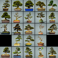 23 Bonsai Tree Collection