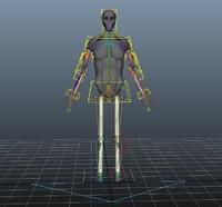 anatomy torso 3D model