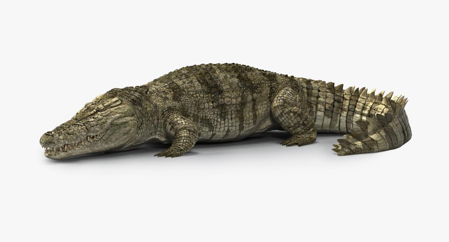 crocodile rigged 3D