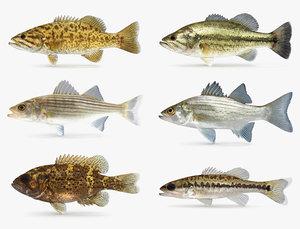 bass smallmouth largemouth 3D