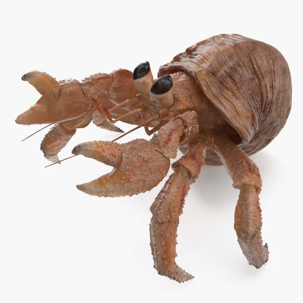 3D model hermit crab rigged