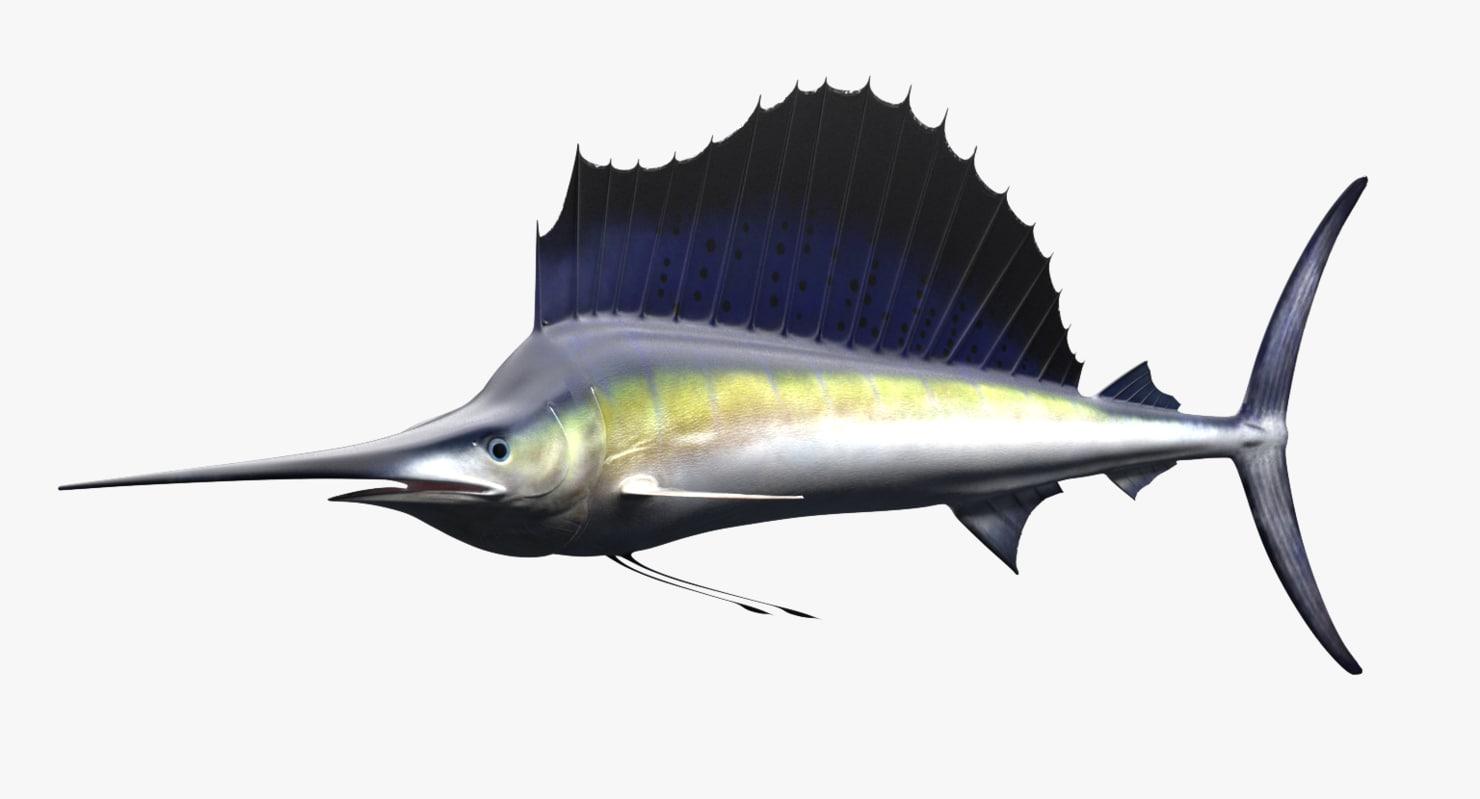 sailfish fish 3D model