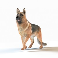 german shepherd rig fur 3D